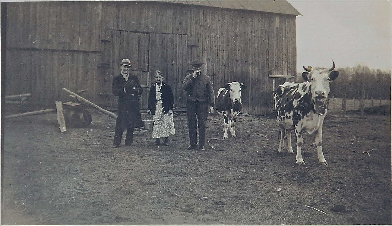 Sand Ridge Farm Cows
