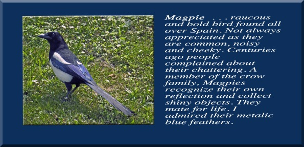 Magpie Text 4