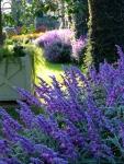 Longwood Gardens Purple