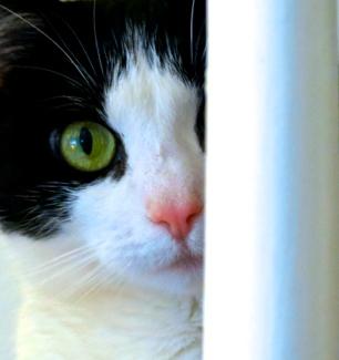 Cat gaze
